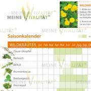 Wildkraeuter_Detailansicht_2
